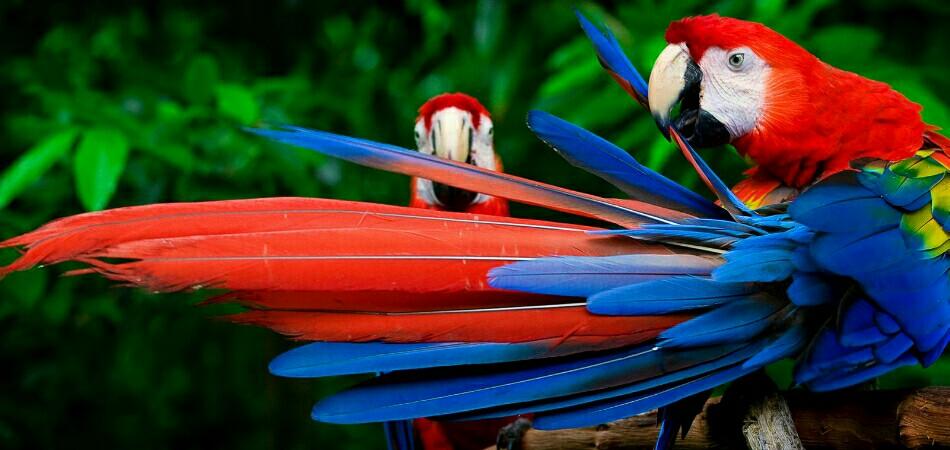 Tambopata Reserve 3 days