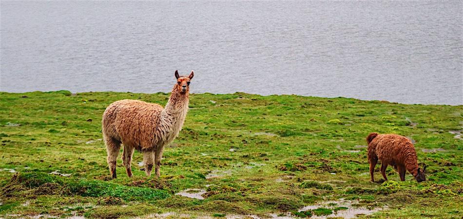 Lares Trek Via Short Inca Trail