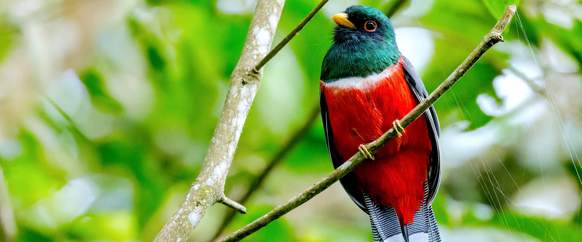 Peru Birdwatching Tours